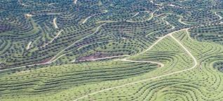 Palmöl – Segen oder Fluch?