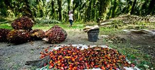 Billiges Palmöl teuer erkauft?