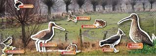 Warum Feuchtgebiete so wichtig für die Natur sind