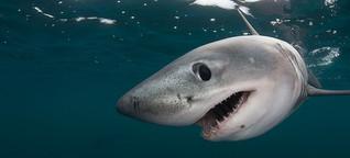 Fotostrecke: Meilenstein für den weltweiten Hai-Schutz