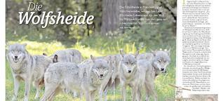 Die Wolfsheide