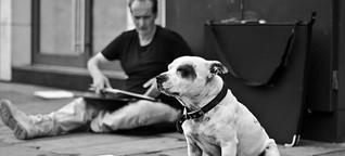 Vangardist.com | Dieser Hund ist weit mehr wert als eine Dose Bier
