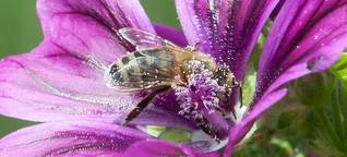 Warenkunde (Bio)-Honig