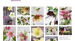 Im Blütenreich der Lenzrosen: Gärtnerei Susanne Peters, Allerlei Seltenes