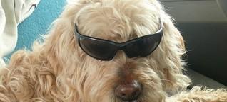 Mit dem Hund auf Urlaub in Europa