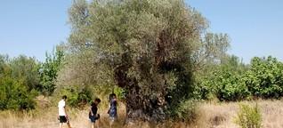 Tourismus in Tunesien: Der grüne Norden