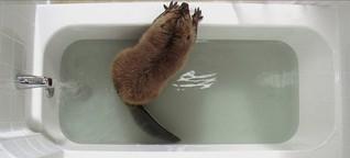 Der Biber nimmt ein Bad