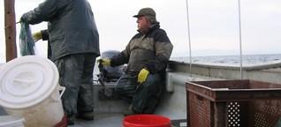 Rheingold: Berufsfischer am (zu) sauberen Bodensee