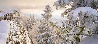 im Woid da liegt a Schnee