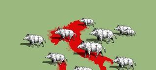 Das Wildschwein pflügt die Toskana um - nun blasen Politiker zum Halali
