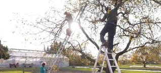 Die letzte Ernte: Menschen mit Behinderung gegen Gärtnerei-Abriss | BR.de
