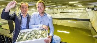 Die Shrimps-Millionäre vom Erdinger Moos: Start-Up züchtet Bio-Garnelen