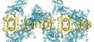 Magnetsinn: Biologische Kompassnadel entdeckt?