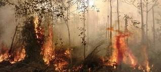 Klimakonferenz: Waldbrände in Indonesien | 1LIVE