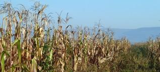 Auf dem Trockenen – Südafrikas Bauern unter Druck
