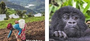 Nachbar Gorilla