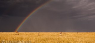 Somewhere over the rainbow Way up high And the dreams that you dreamed of  Once in a lullaby Somewhere over the rainbow