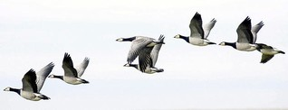 Alle Jahre wieder: Zugvögel legen große Entfernungen zurück