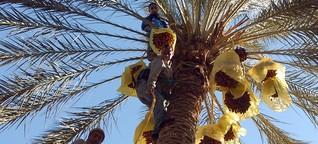 Tunesiens süßer Exportschlager