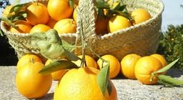 Wo die Orangen immer blühen