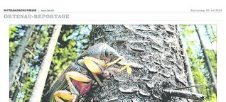 Käfer-Alarm