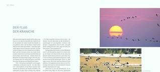 »Der Flug der Kraniche« im National-Geographic-Buch »Deutschlands Küsten und Inseln«