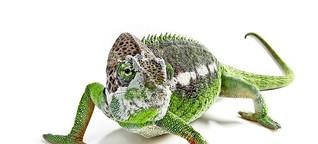 Bestrebungen im Kreis Ludwigsburg: Zoohandel künftig ohne Reptilien