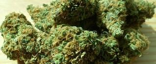 Geocacher finden 4 Päkchen Marihuana