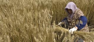 Chinas Landwirtschaft auf dem Weg in die Moderne
