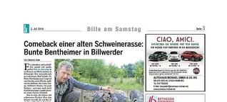 Comeback einer alten Schweinerasse: Bunte Bentheimer in Billwerder