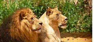 NATUR | Zoo der Zukunft