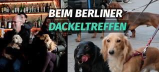 Die Berliner Dackelbande trifft sich in Neukölln