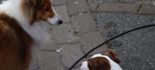 Liebhaber der Hunde aufgepasst!