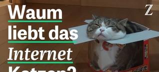 Warum das Internet Katzen liebt