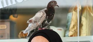 Junge Frau aus Mietersheim wird seit einem Jahr von Taube verfolgt