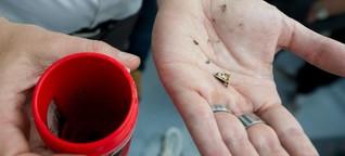 Müll im Meer - Ostsee-Fische schlucken nicht mehr Plastik als früher