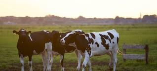 Milchvieh: Qualitätsmängel bei Grassilage vermeiden