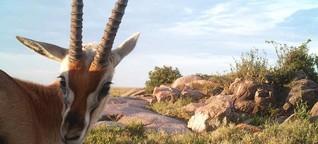 Selfies aus der Serengeti