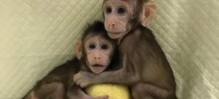 """Experiment in China: Forscher klonen erstmals Affen mit """"Dolly""""-Methode"""