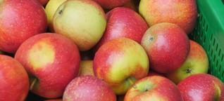 Vorrat an Bodensee-Äpfeln neigt sich dem Ende zu