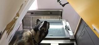 Rettung auf vier Pfoten - Für Lawinenhunde ist der Rettungseinsatz nur ein Spiel - 3sat.Mediathek