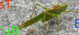 NABU-Insektensommer-Zählung