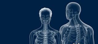 Die Niere: Lage, Funktion und Erkrankungen