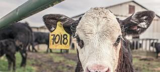 Greenpeace-Report: Unser Essen macht krank