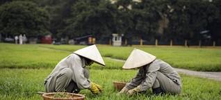 Warum vietnamesische Migranten einen guten Ruf haben