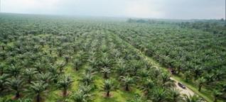 """Video """"Palmöl - Besserer Anbau statt Boykott"""" - Gut zu wissen"""