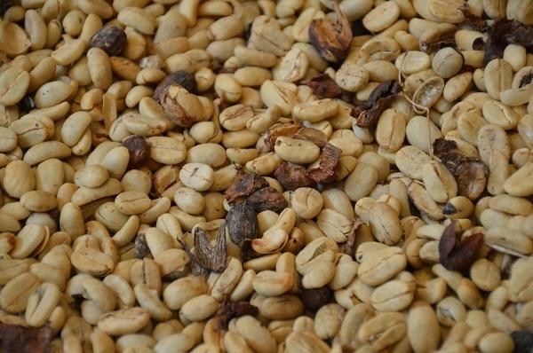 Der Kaffeekönig im Bettlergewand