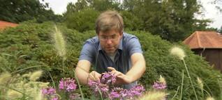 "MOMA-Reporter: Nabu-Aktion ""Insekten zählen"" | Morgenmagazin"