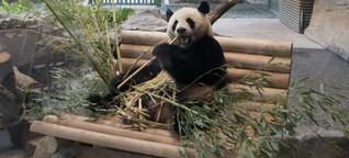 Wie deutsche Zoos ihr Image vom Tiergehege loswerden wollen