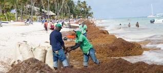 Sargassum: Neuer Fluch der Karibik
